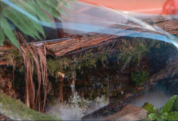 Reconstitution d'une source naturelle dans une vitrine de magasin en centre ville (détail)