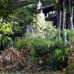 Jardin exotique sous terrasse
